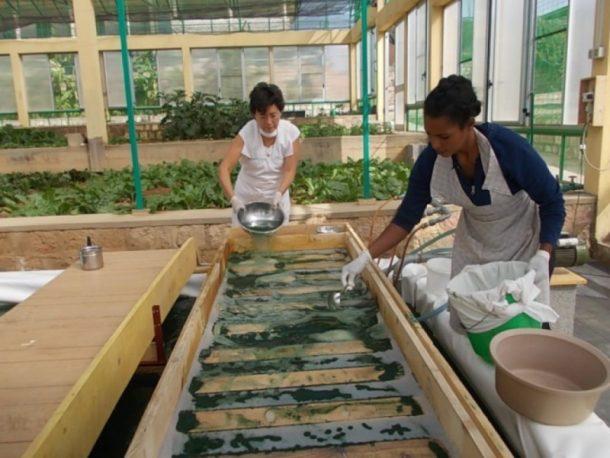 alga spirulina contro la malnutrizione